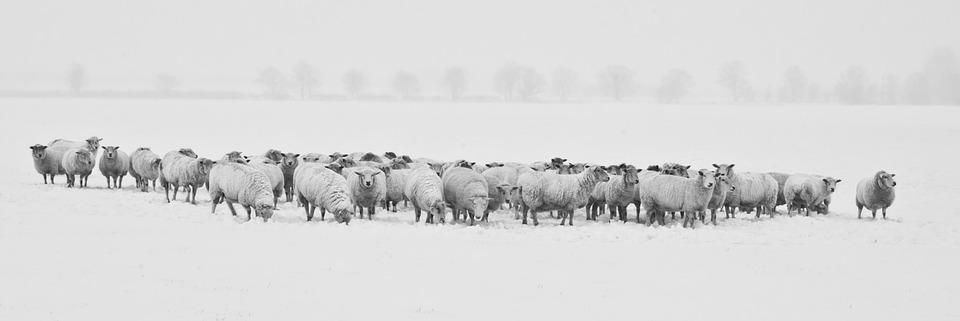 pastorizia invernale. Resilienza montana